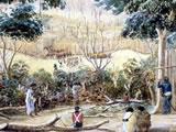 Ruapekapeka pa occupied by British forces