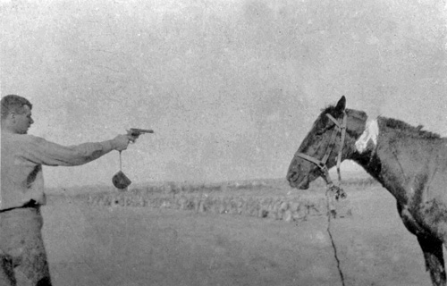 Shooting wounded horse