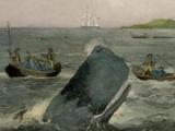 NZ whalers harpoon their last victim