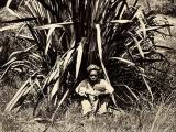 Pasifika labourers arrive in Auckland