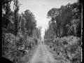 Bush road photograph by James Bragge