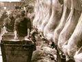 Processing sheep carcasses