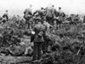 Gallipoli armistice