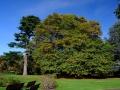 Ashburton gardens victory oak