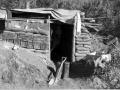 Korean War 'hutchies'