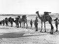 Camel artillery on the march