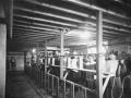 Inhalation chamber during the 1918 influenza pandemic