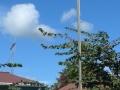 Hikurangi school memorial