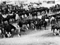 NZ horses and carts at Alexandria