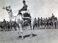 Ottoman Army cameliers