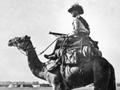 Australian camelier 1916