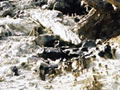 Old coal drill hole