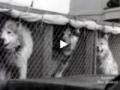 Dogs versus tractors on Antarctica