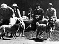 Dogs on Quail Island prior to departure for Antarctica