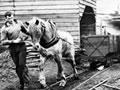 Horse towing coal carts