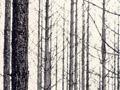 John Johns, Forest fires, Balmoral