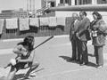 Maori challenge at Parliament, 1975
