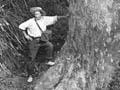 Henry Winkelmann image of Whangaroa forest