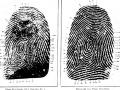 Fingerprints help convict murderer