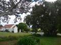 Onerahi memorial oak tree grove
