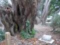 Puni school memorials