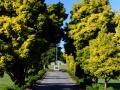 Ruru Lawn cemetery memorials