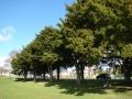 Tauranga District High School memorial trees