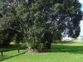 Tauranga Memorial Avenue