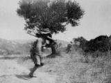 New Zealanders attack Hill 60